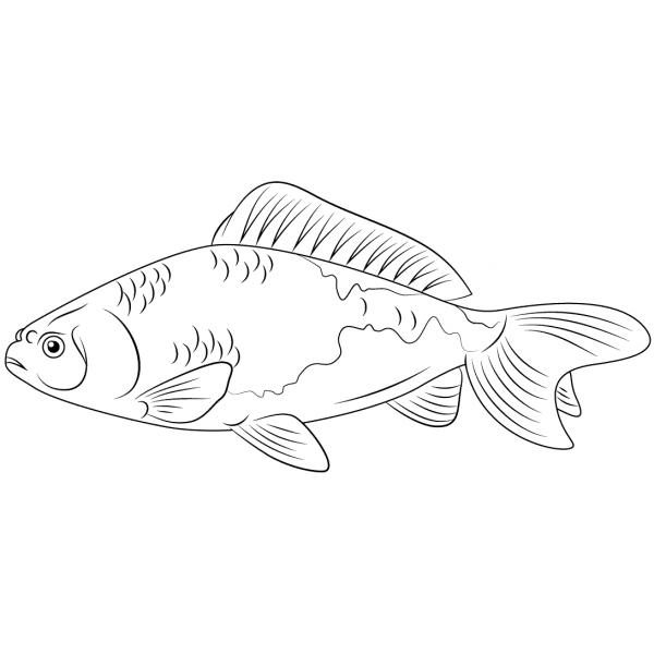 Stampaecoloraweb disegno da colorare pesce rosso for Disegni di pesci da stampare