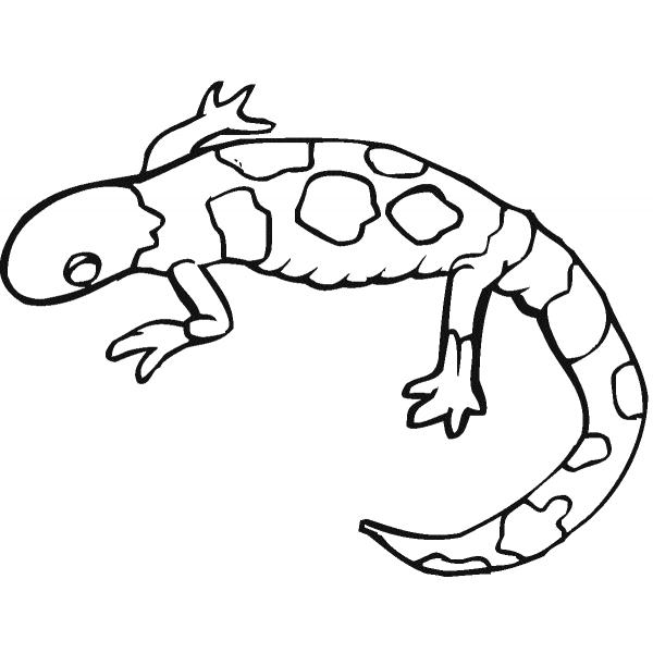 Disegni Da Colorare Bambini Animali.17 Disegni Salamandra Da Colorare Anfibi Animali