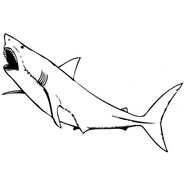 10 disegni squalo bianco da colorare for Disegno squalo bianco