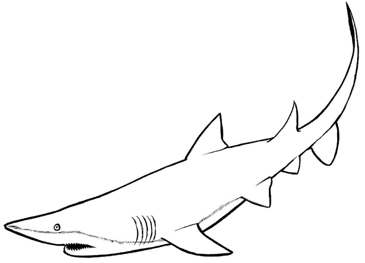 10 disegni squali facili da colorare per bambini piccoli for Squalo da colorare per bambini