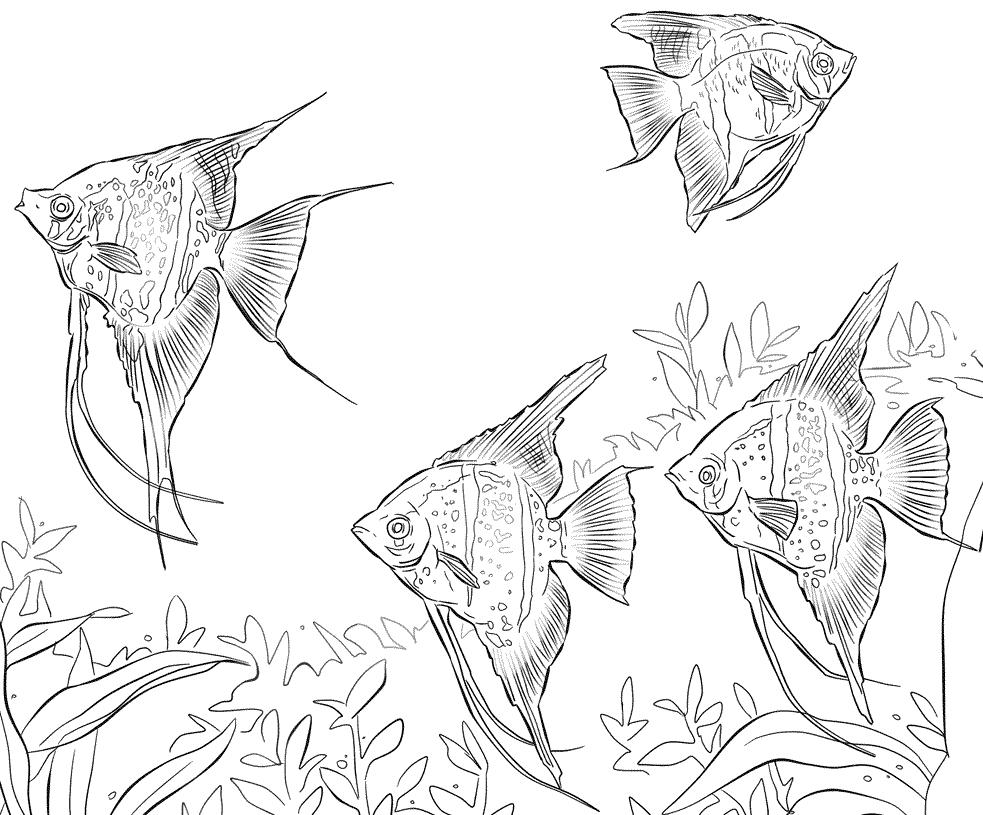 7 disegni di pesci tropicali da colorare for Disegni di pesci da colorare e stampare