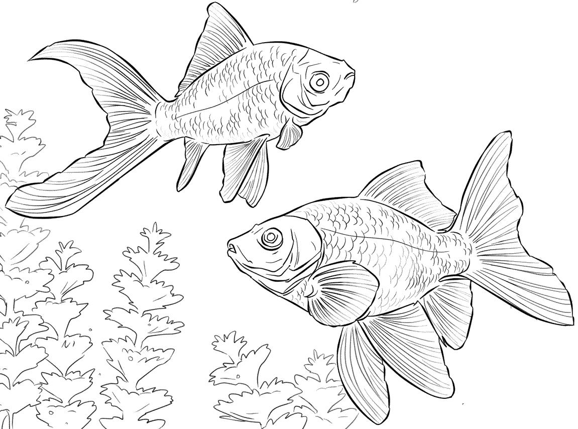 Stampaecoloraweb disegno da colorare pesce rosso for Immagini pesciolini