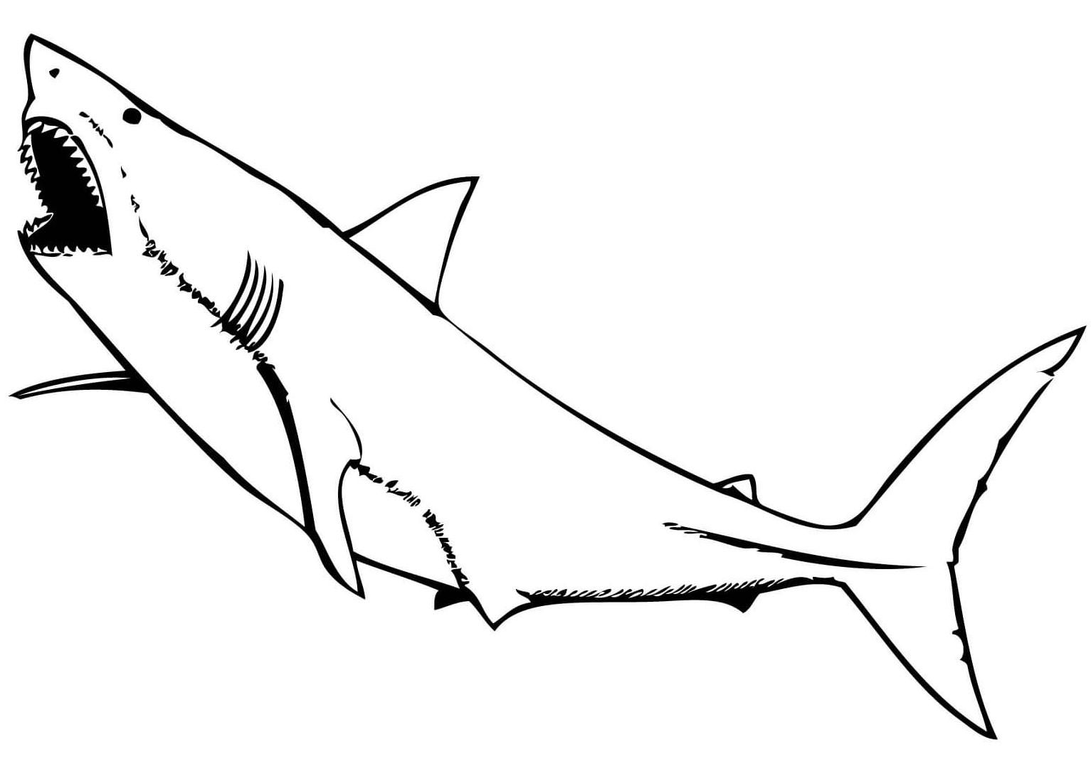 10 disegni squalo bianco da colorare