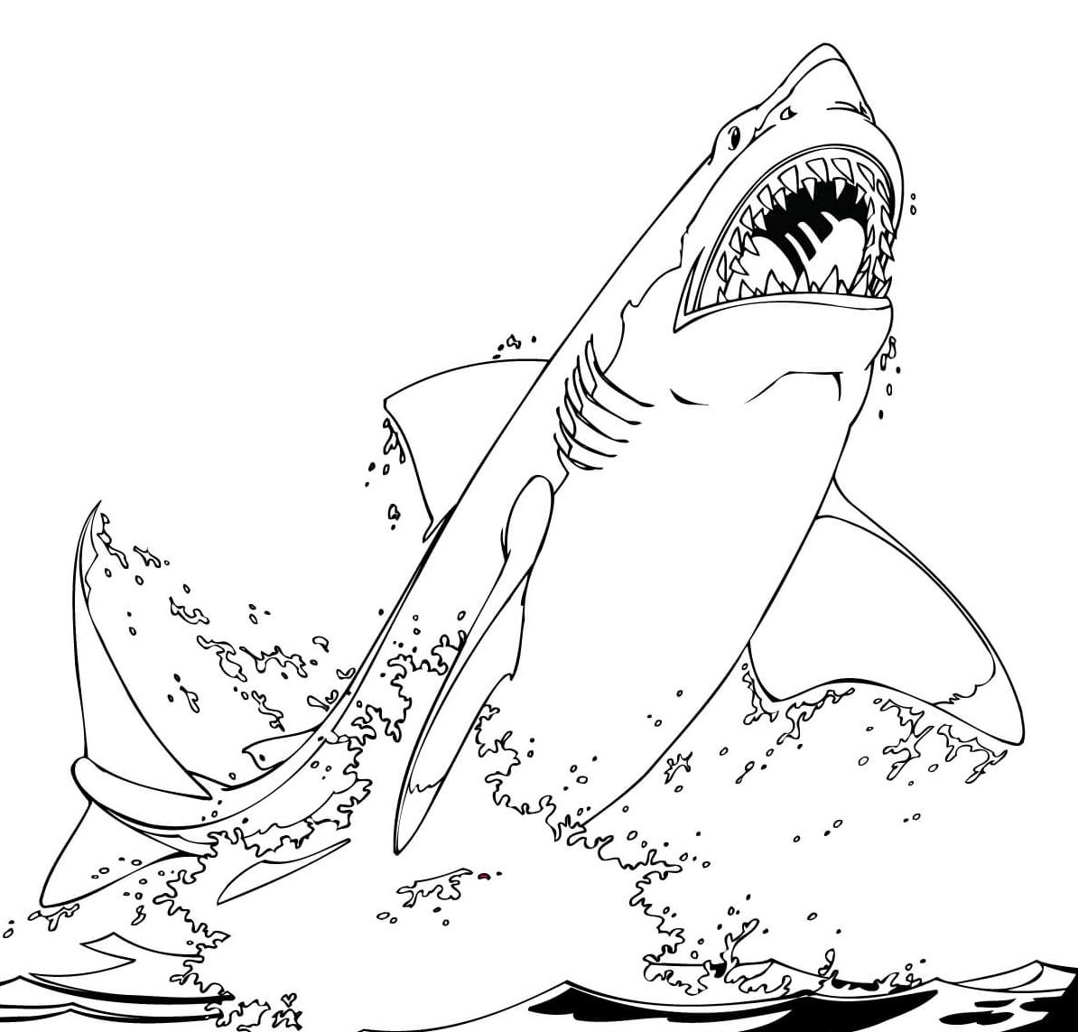 10 disegni squalo bianco da colorare for Squali da colorare