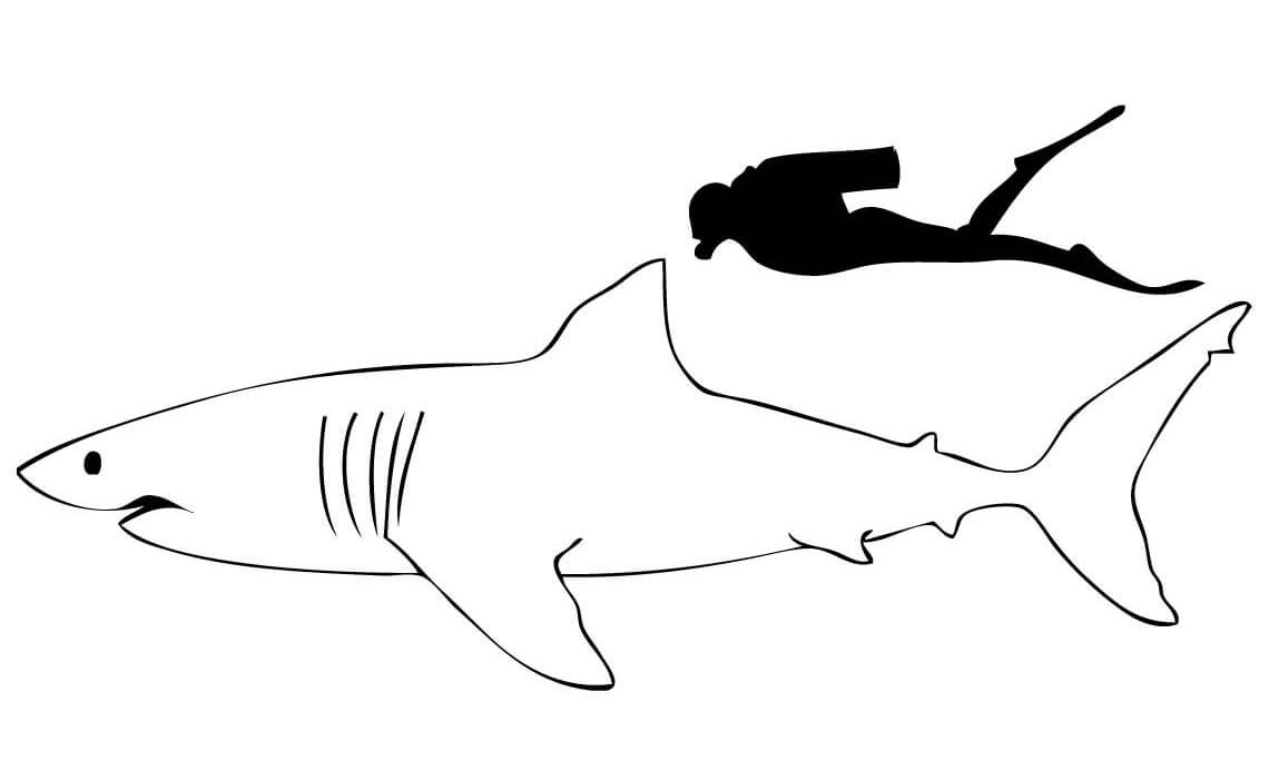 10 disegni squalo bianco da colorare for Squalo bianco da colorare