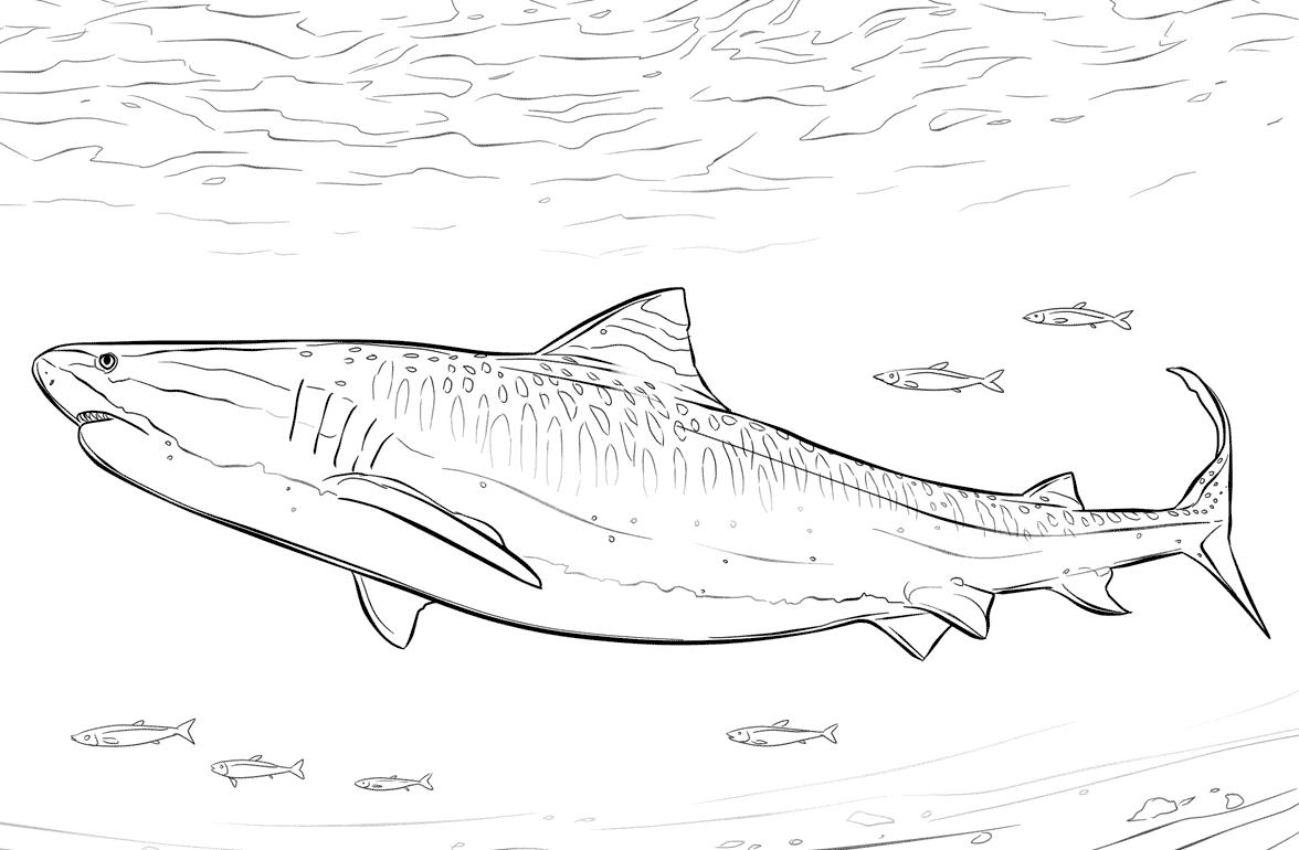 Рисунок китовой акулы карандашом