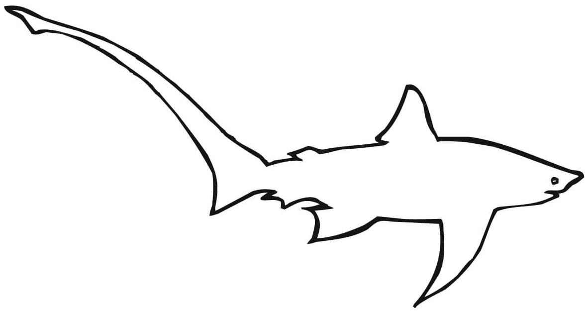 4 disegni squalo volpe da colorare e stampare for Disegno squalo bianco