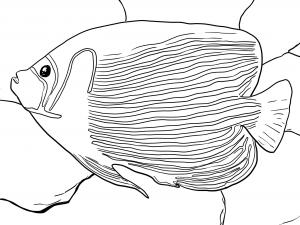 Pesce Angelo
